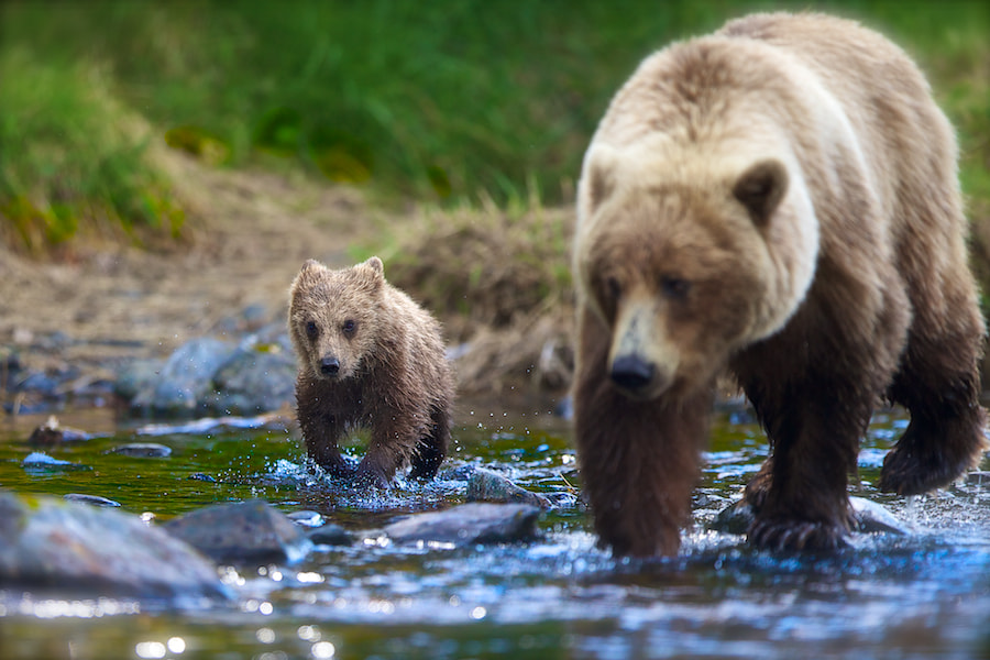 Photograph In Charge by Buck Shreck on 500px