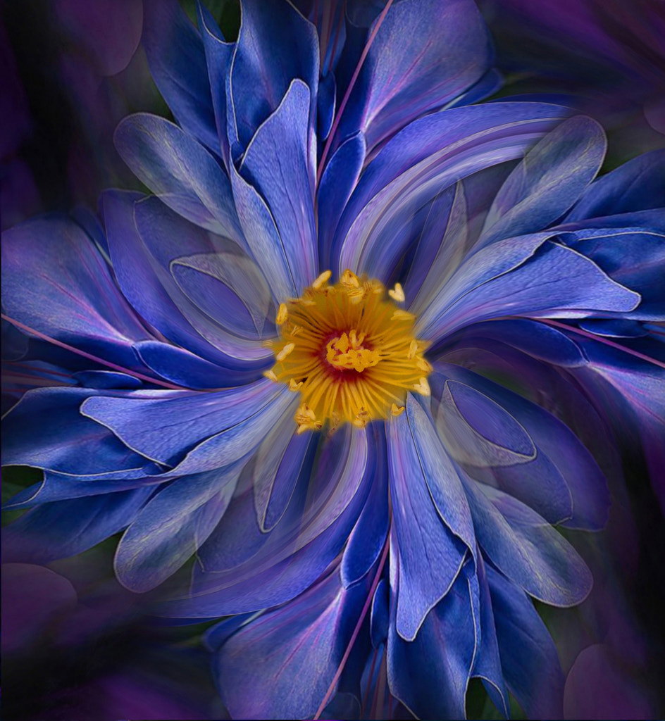 Photograph Blue daisy by Carmen Velcic on 500px