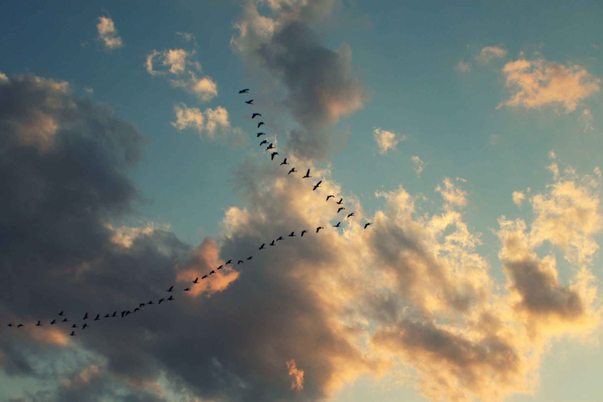 Photograph Flying in the sky  by Amber  McBride  on 500px