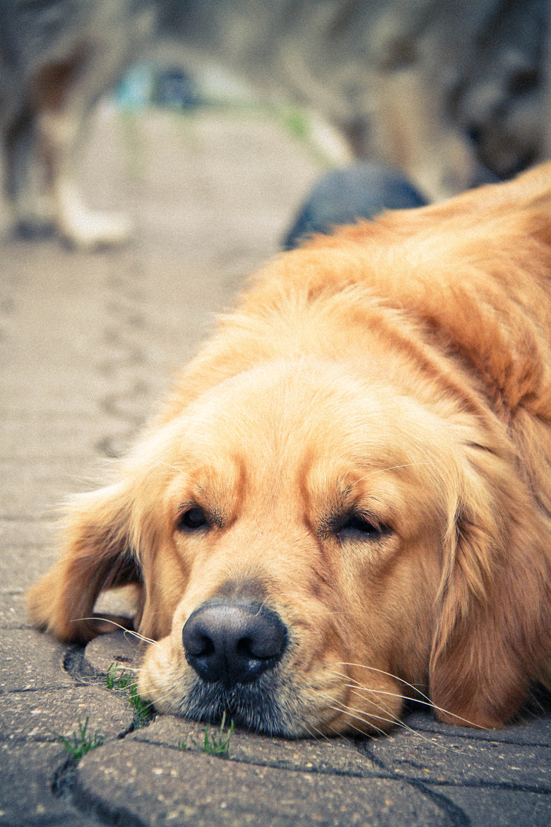 Photograph A Dog Alone by Barrientos Brissi on 500px