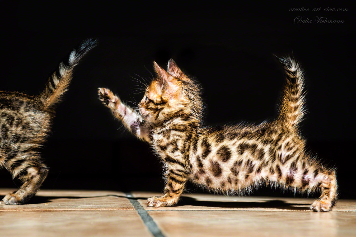 Photograph The little Leopard by Dalia Fichmann on 500px