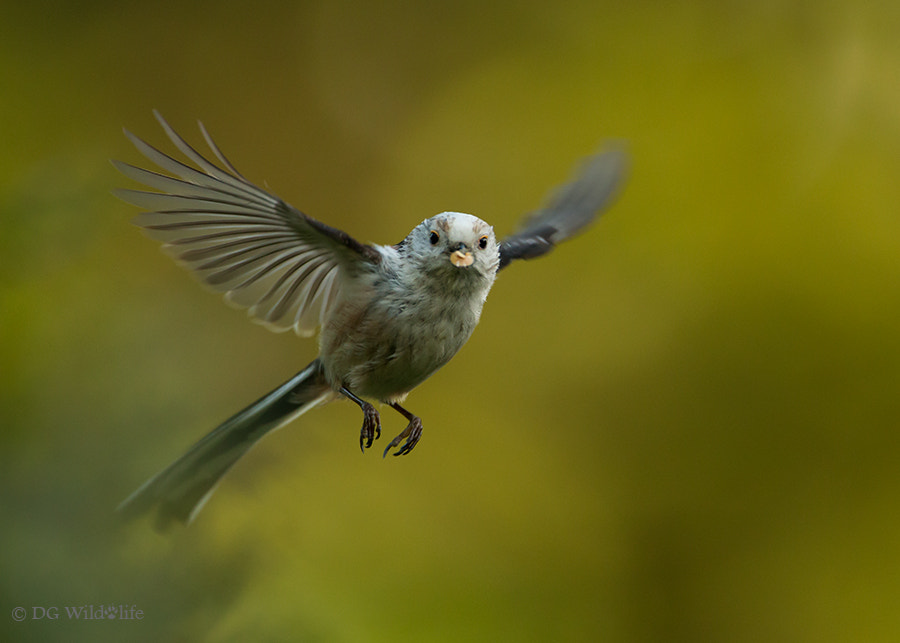 Photograph Caught in Flight by Giedrius Stakauskas on 500px