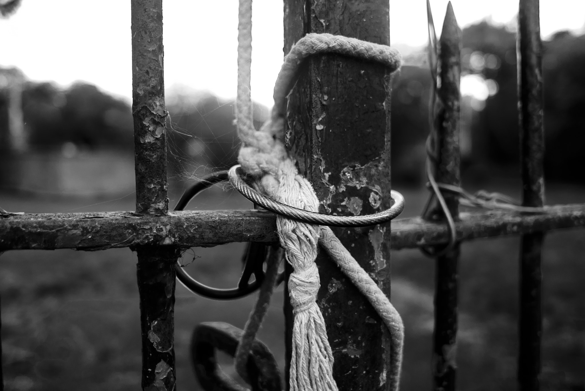 Photograph Extremely locked gates by Eoin McDonagh on 500px