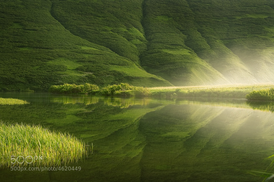 Photograph Livin' Green by Serhio  on 500px
