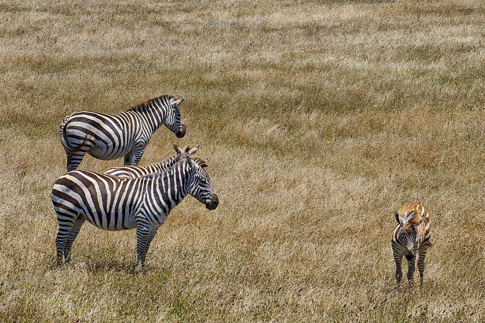 Photograph Out of Africa by Greg McLemore on 500px