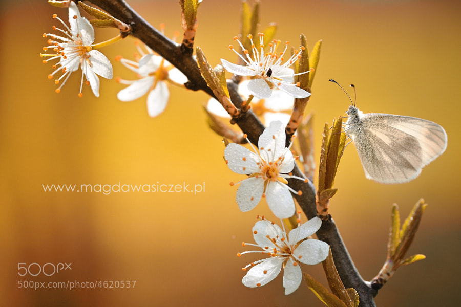 Photograph The first sign of spring by Magda Wasiczek on 500px