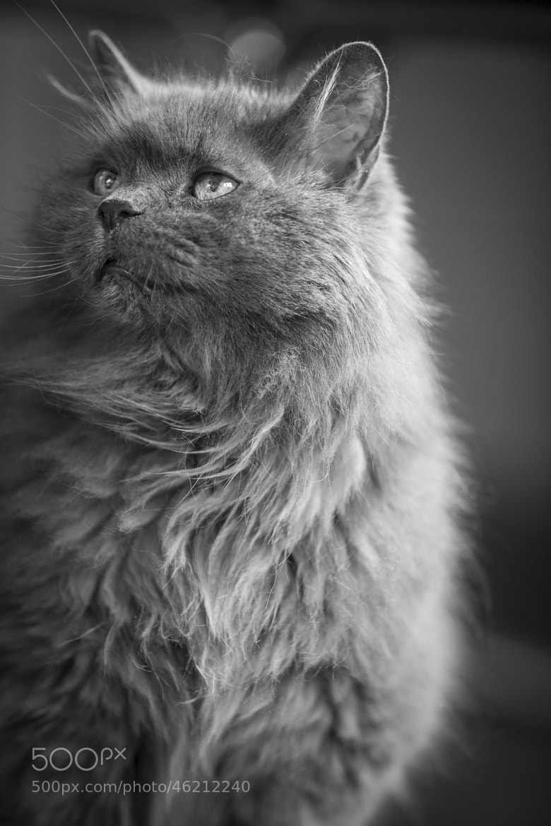 Photograph The cat by Stefano Termanini on 500px