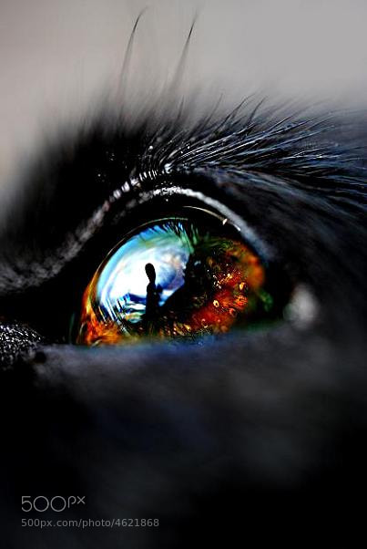 Photograph Dog eye by Linn  photography on 500px