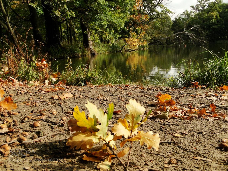 Photograph Oak Leaves by Marek Pietrzyk on 500px