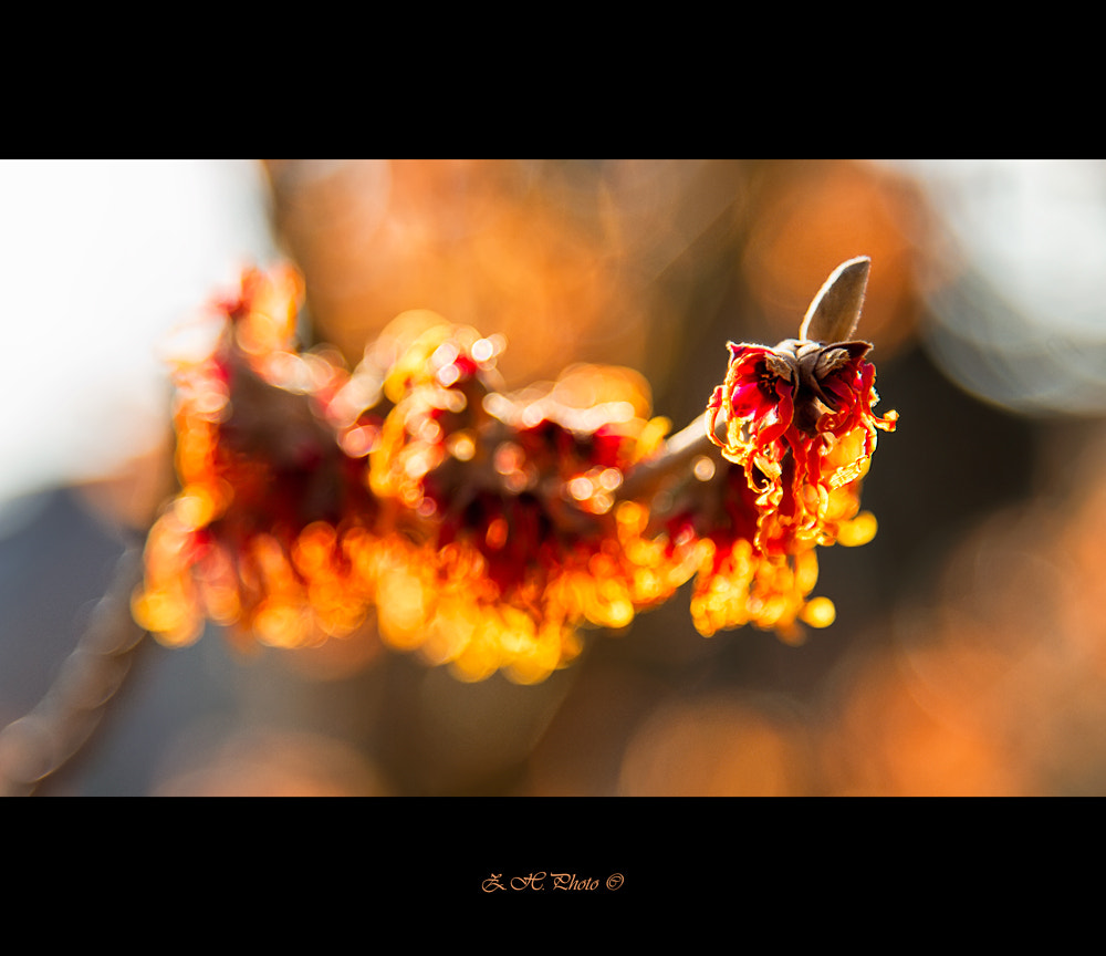 Photograph Victims of Frost by Zdravko  Horvat on 500px