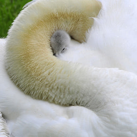 MOTHER'S LOVE by Dan Myers (DMMyers) on 500px.com