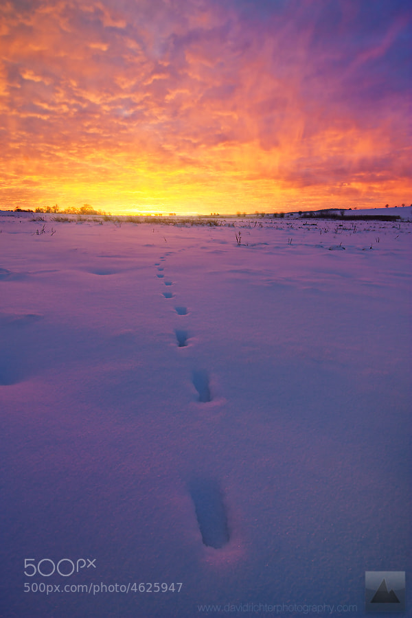 Photograph Leave Only Footprints by David Richter on 500px