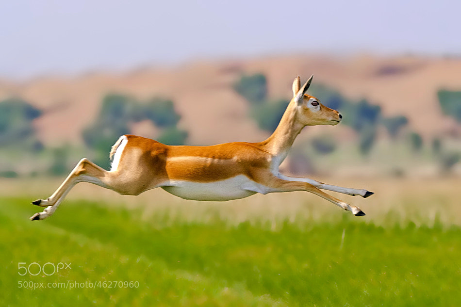 Photograph Up in the air by Nitin  Prabhudesai on 500px