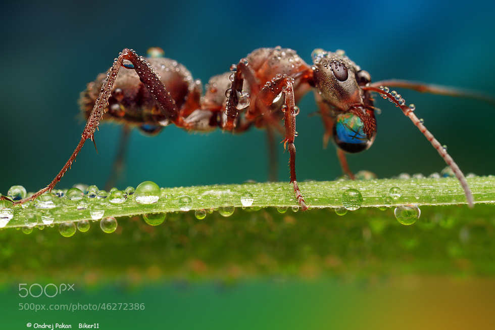 Photograph Bubble gum by Ondrej Pakan on 500px