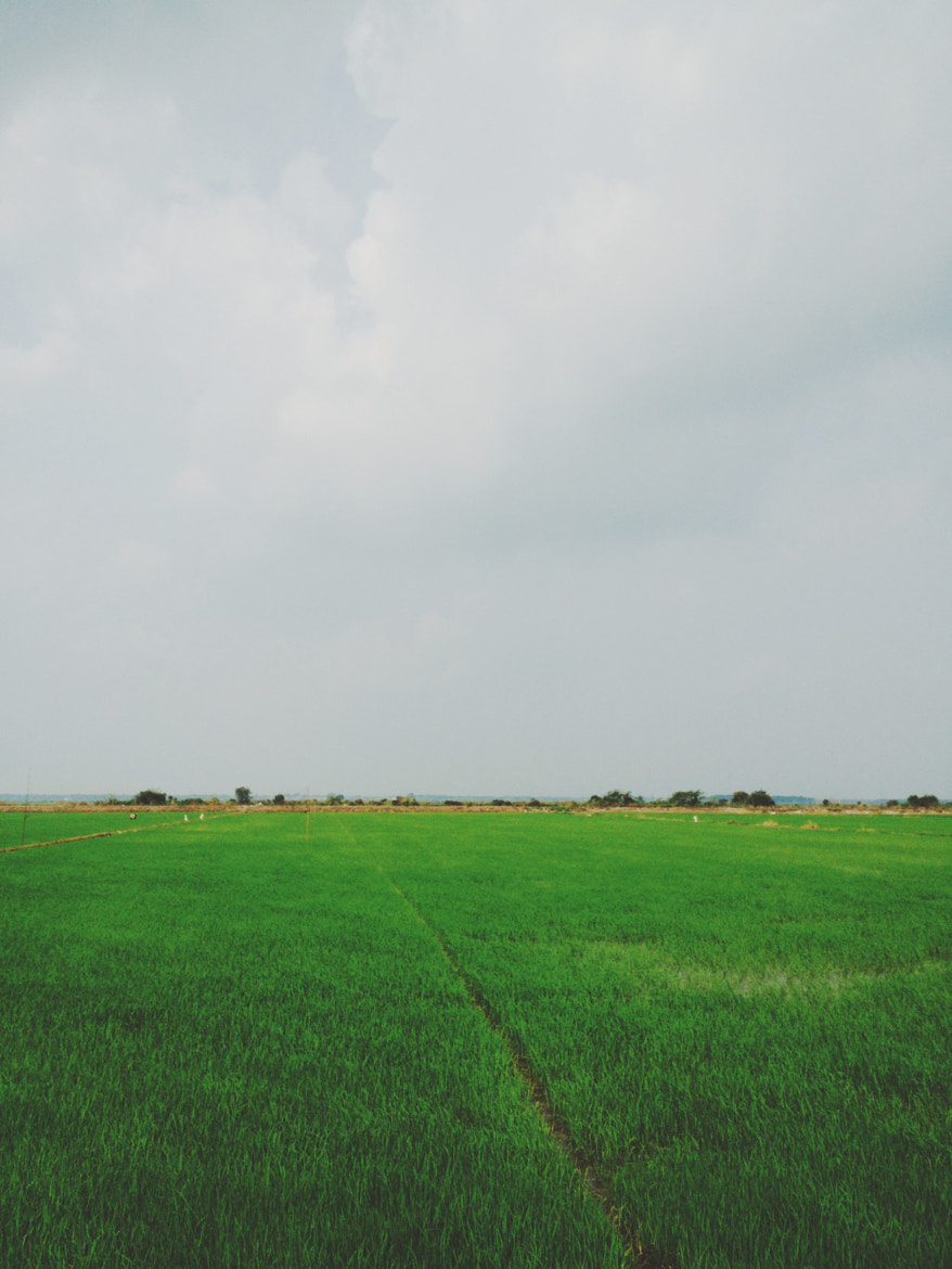 Photograph More Paddy Fields by Brandon Leong on 500px