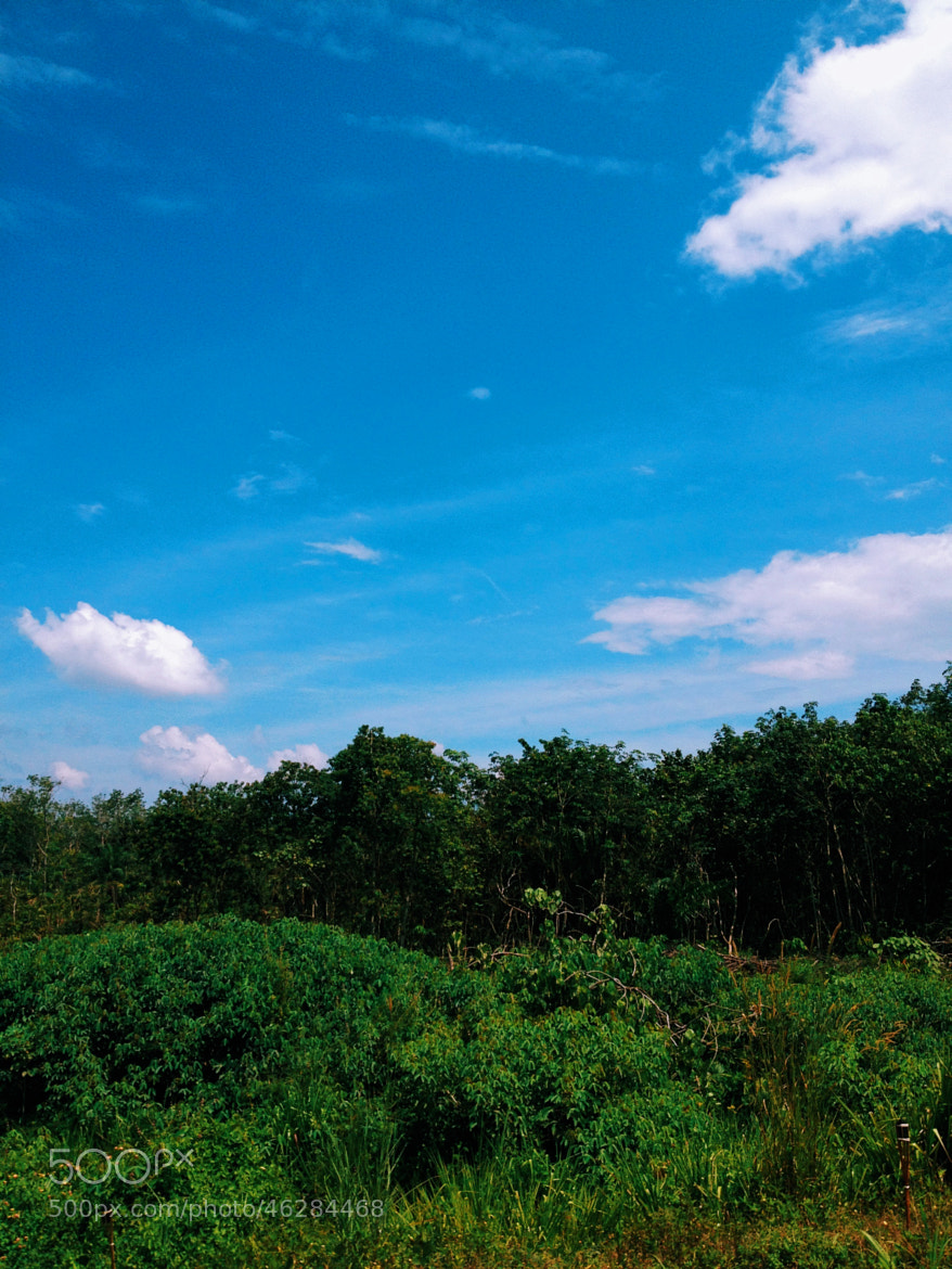 Photograph Blue Skies and Forest by Brandon Leong on 500px