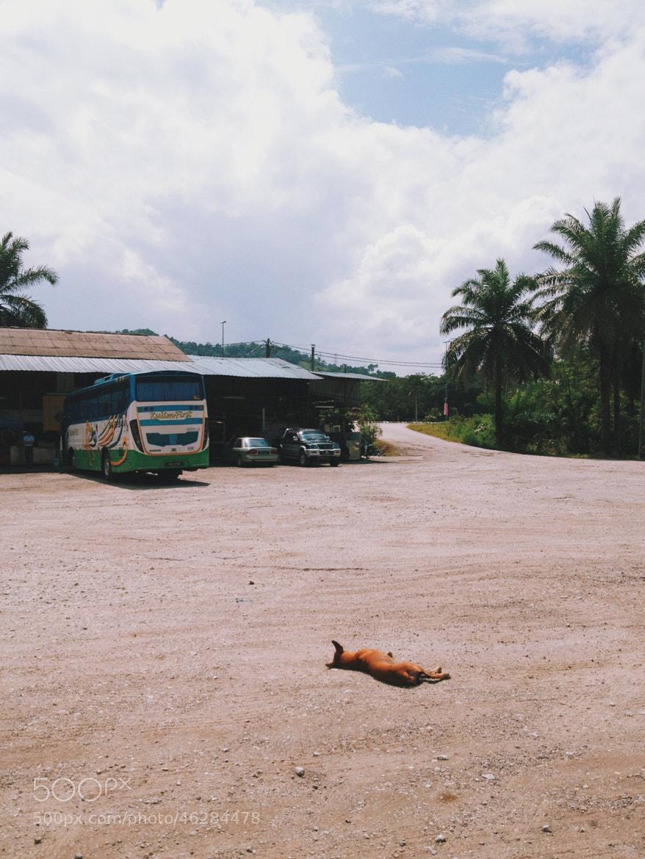 Photograph Sleeping Dog by Brandon Leong on 500px