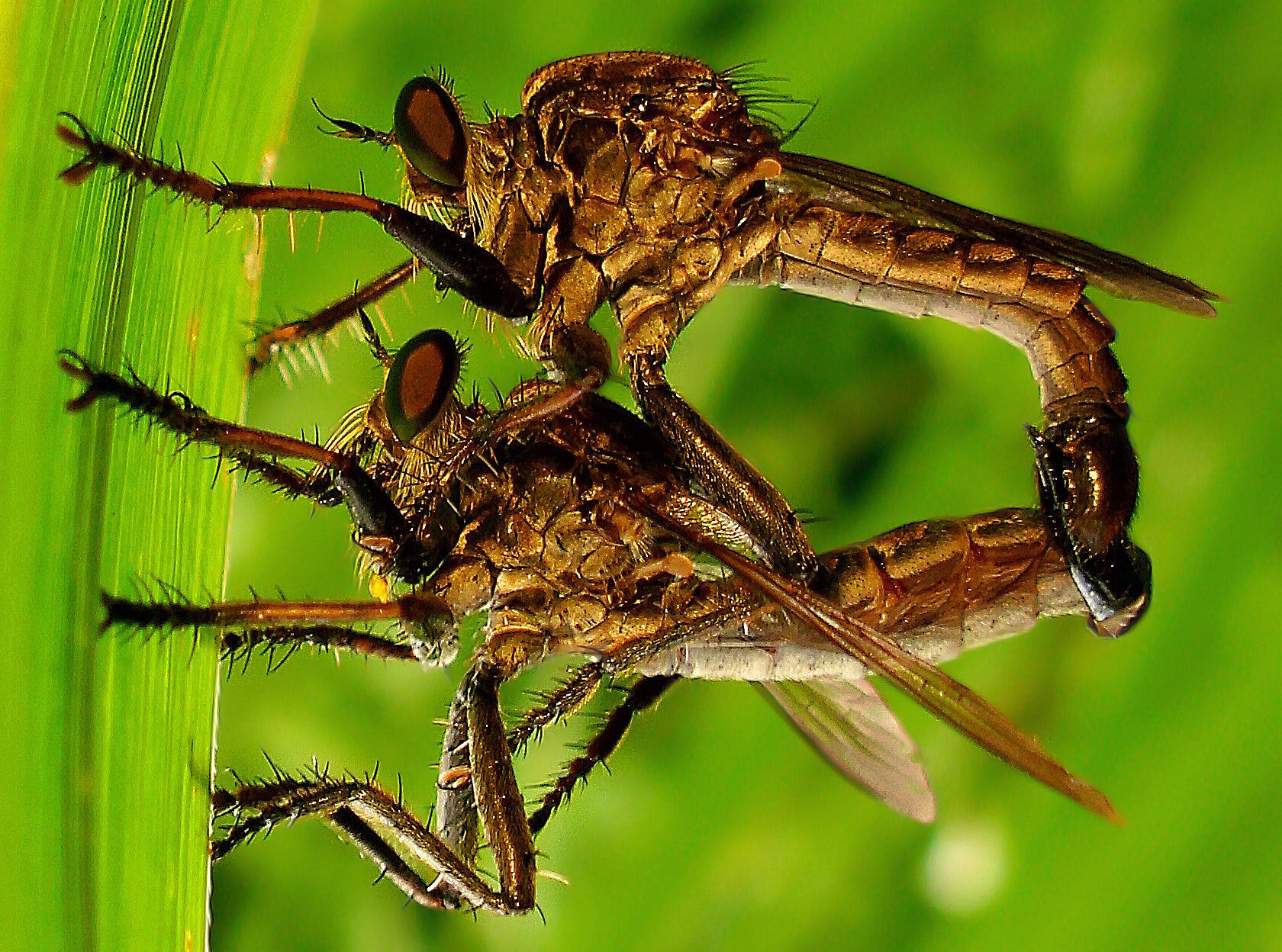 Photograph Mating Style by Iwan Ramawan on 500px