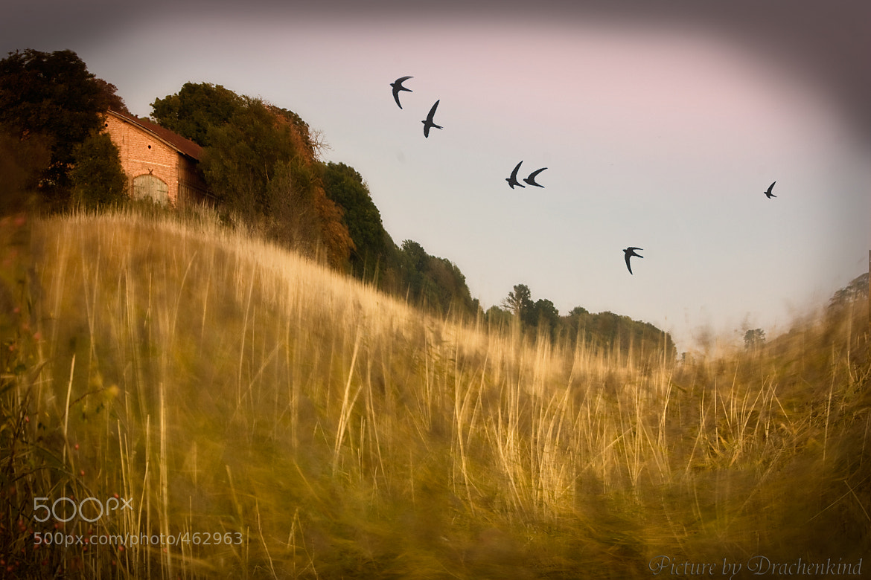 Photograph autumn by drachenkind xxx on 500px