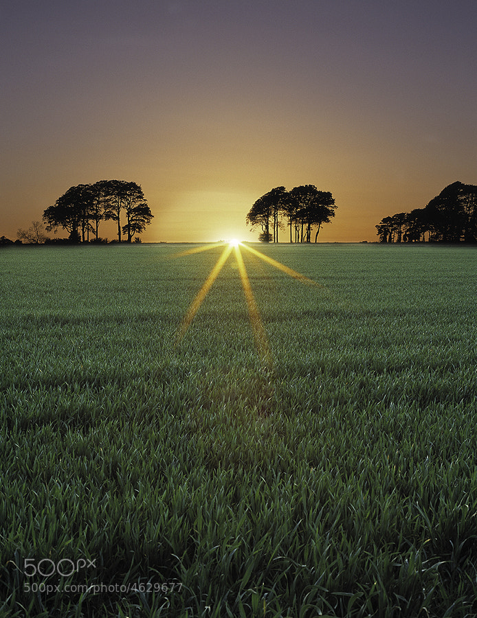 Arable crop at sunset in the Cotswolds UK