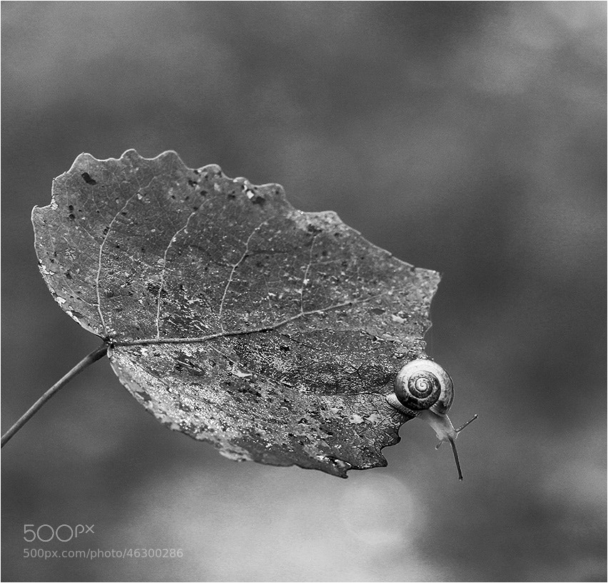 Photograph Untitled by Julia  on 500px