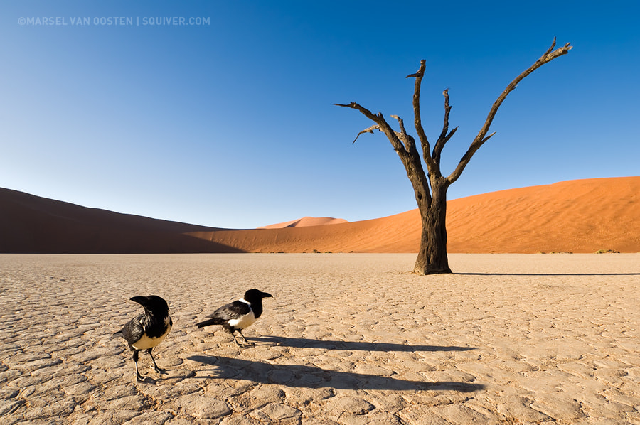 Photograph Of Life and Death by Marsel van Oosten on 500px