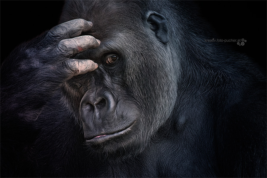 Photograph thoughtful by Michaela Pucher on 500px