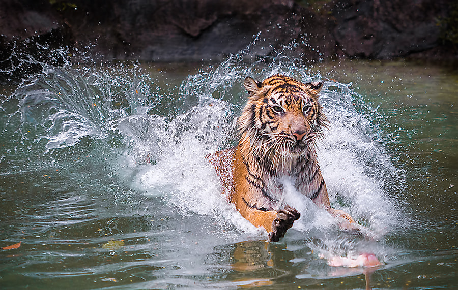 Photograph Surfing by woe hendrik husin on 500px