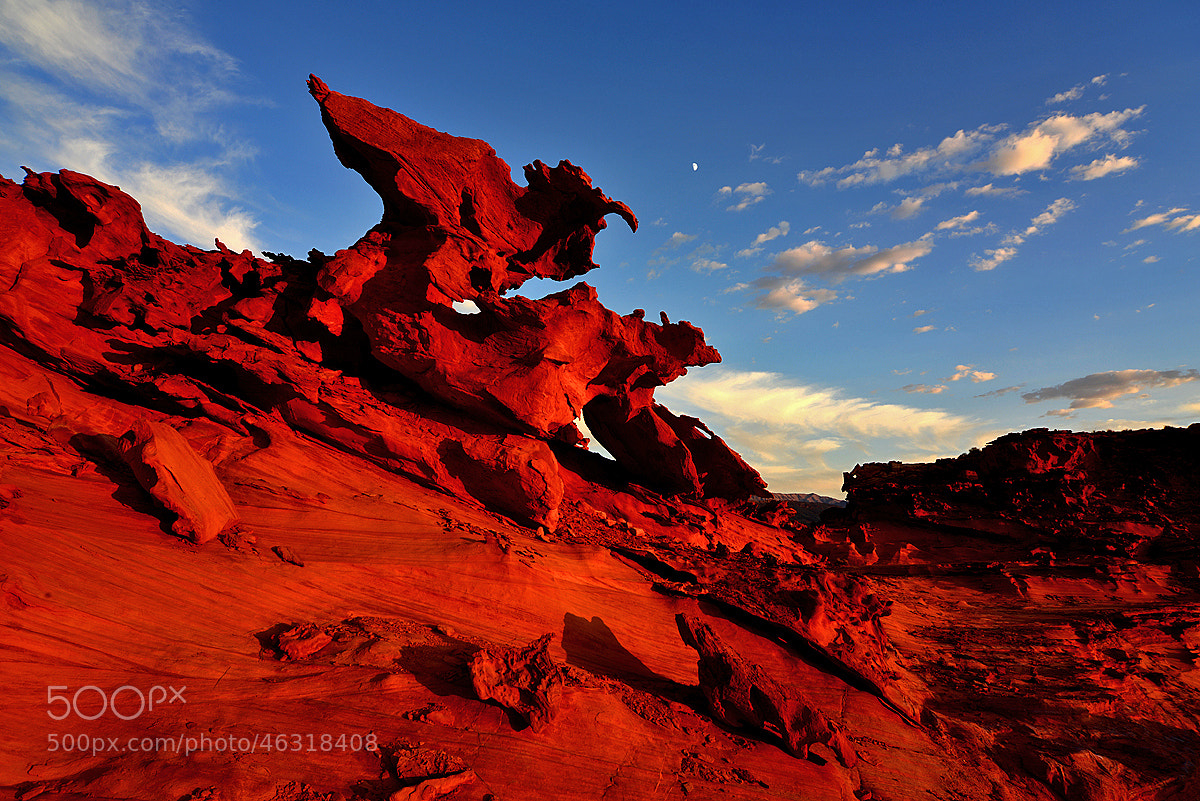 Photograph Red Raptor by Michael Hubrich on 500px