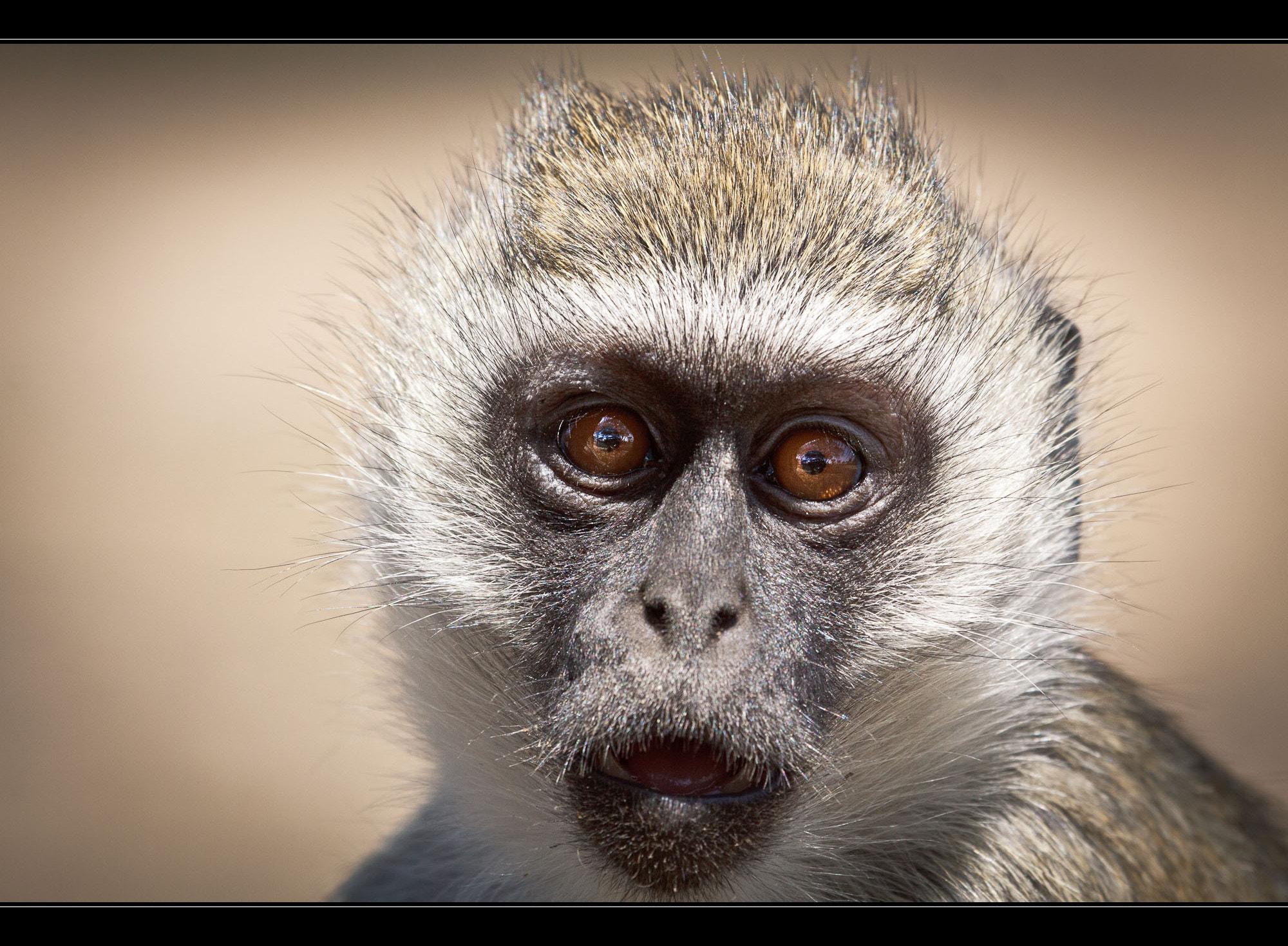 Photograph Monkey by Roger Uceda Molera on 500px