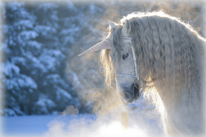 Photograph last unicorn by Yvonne I. on 500px