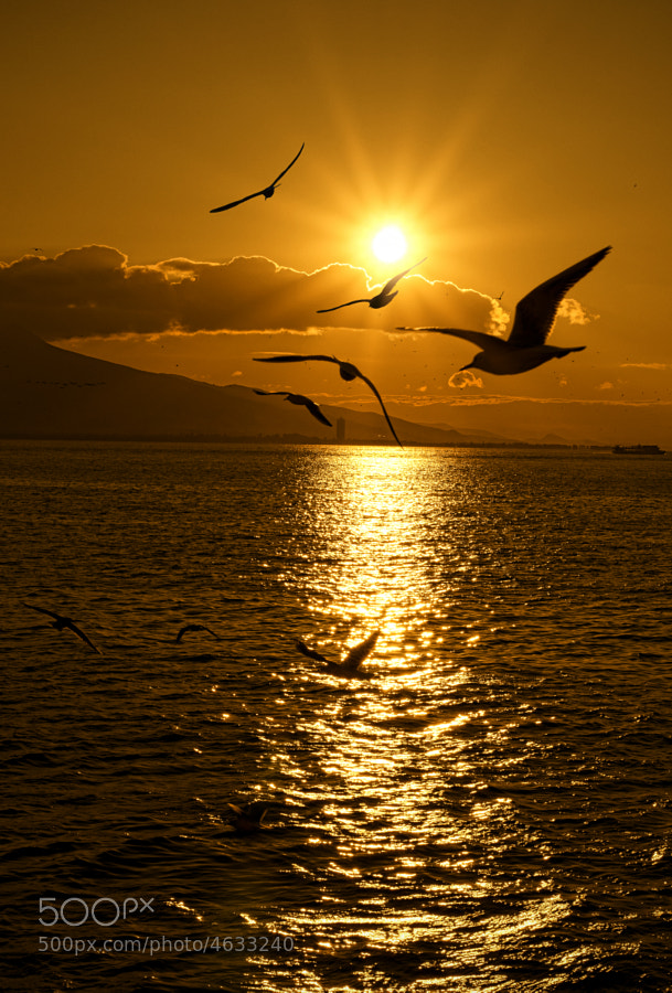 Photograph Seagulls-Sunset by Emre KAYA on 500px
