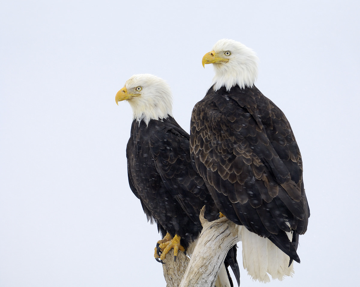Photograph Une Couple Formidable by Harry  Eggens on 500px
