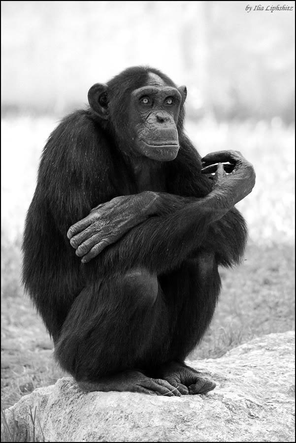 The wise monkey