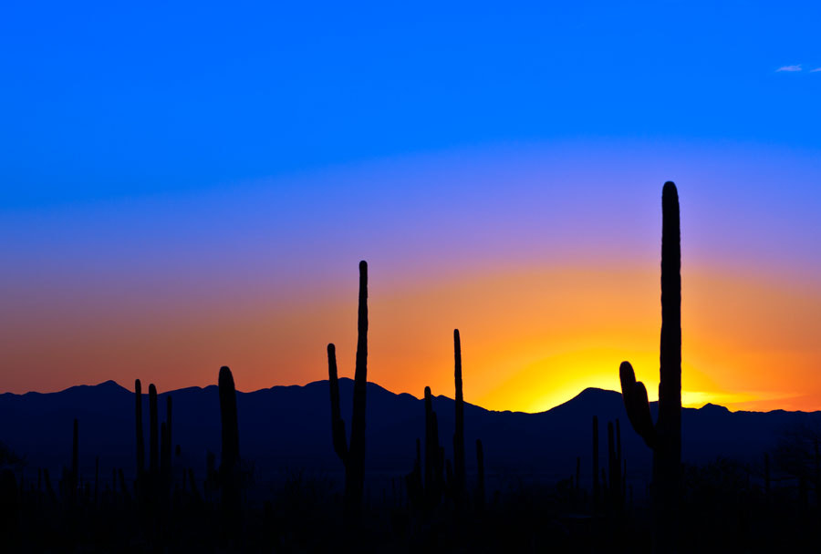 Photograph Cactus Sunset by Richard Parry on 500px
