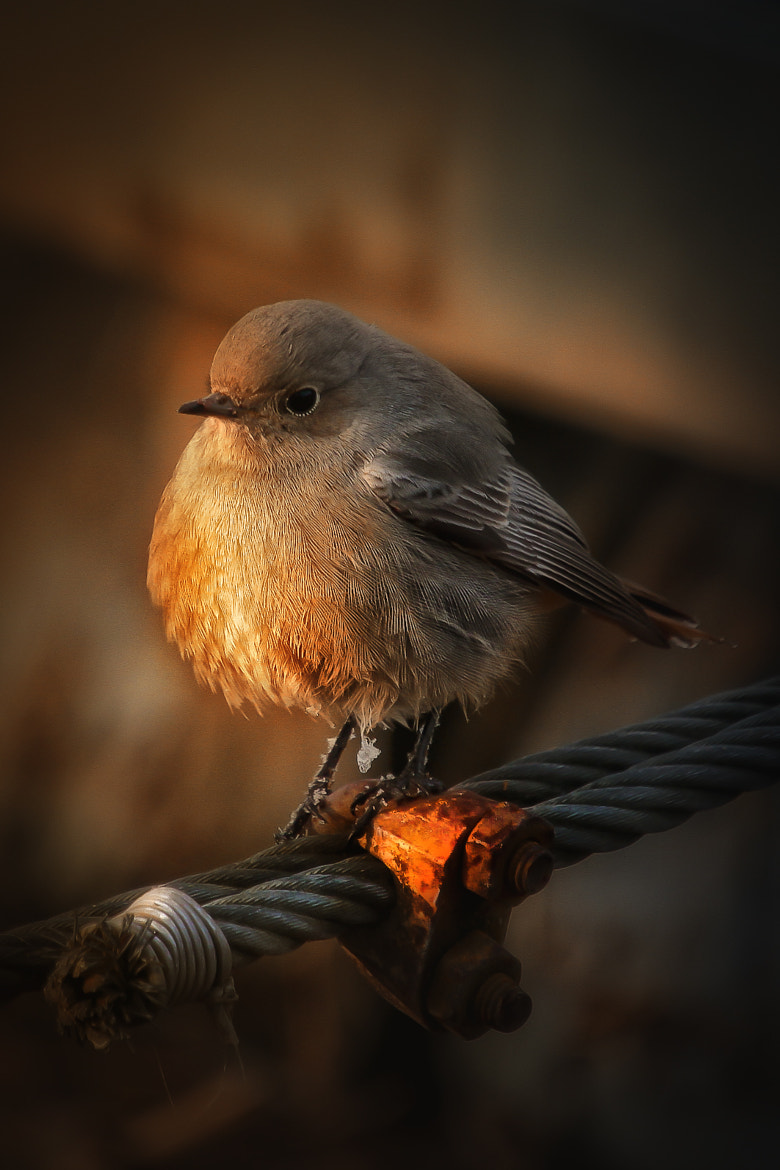 Photograph little bird by Detlef Knapp on 500px