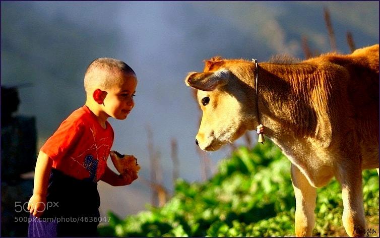 Photograph children and calf by Nurşen Biçer on 500px