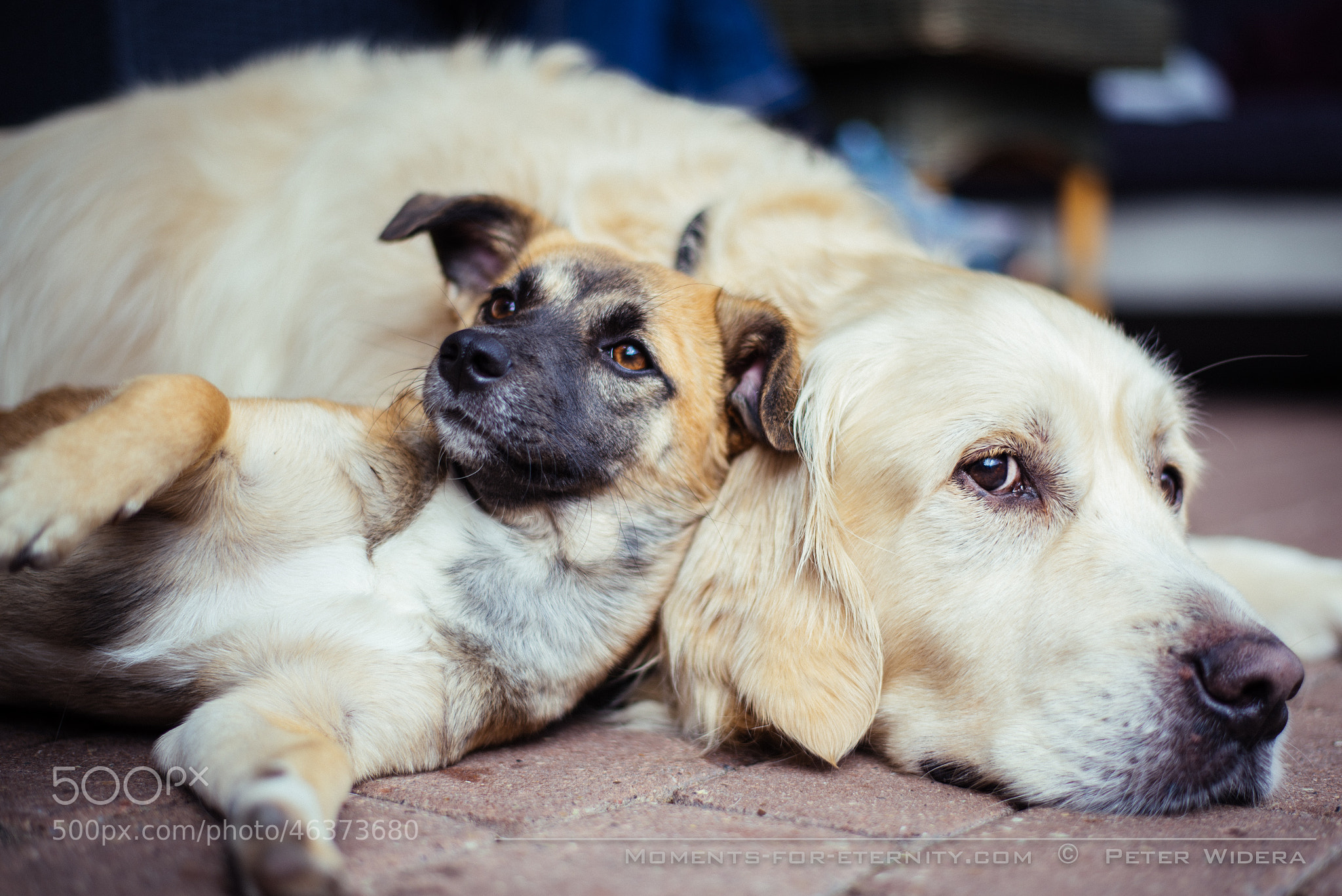 Photograph Cookie & Louis by Peter Widera on 500px