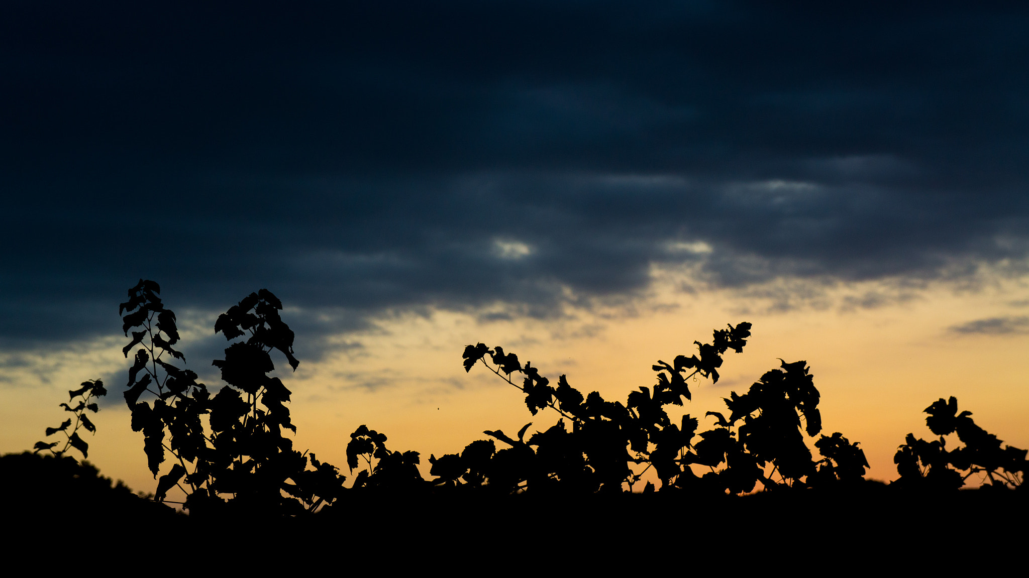 Photograph Sunset over a wineyard by Lluís Grau on 500px