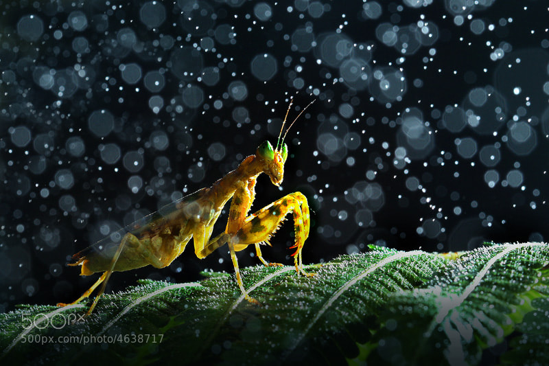 Photograph Thailand Grasshopper by sarawut khamfoo on 500px