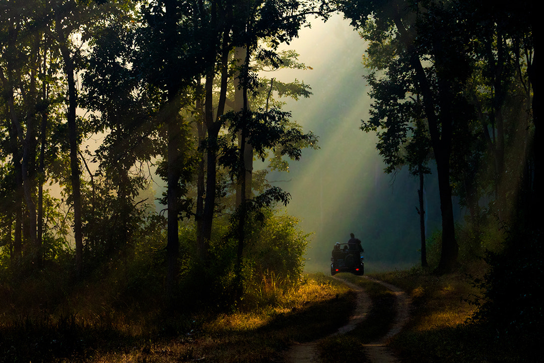 Photograph Morning in Kanha... by Amod Sane on 500px