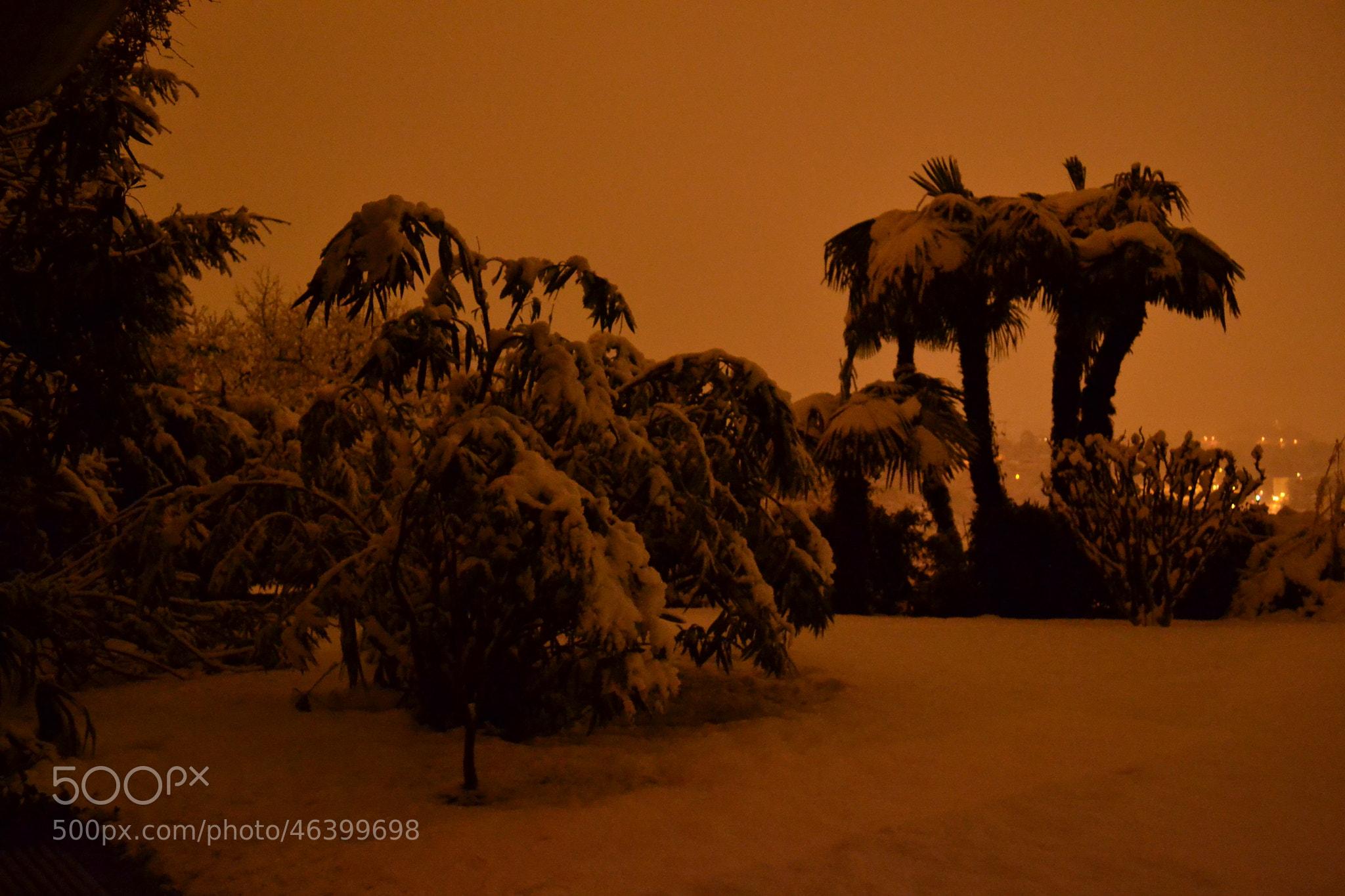 Photograph snow on palm tree by Jersey Joe on 500px