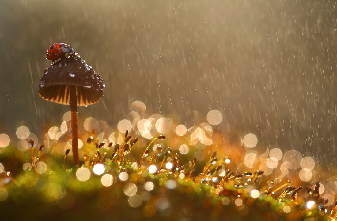 Photograph Rain by Vadim Trunov on 500px
