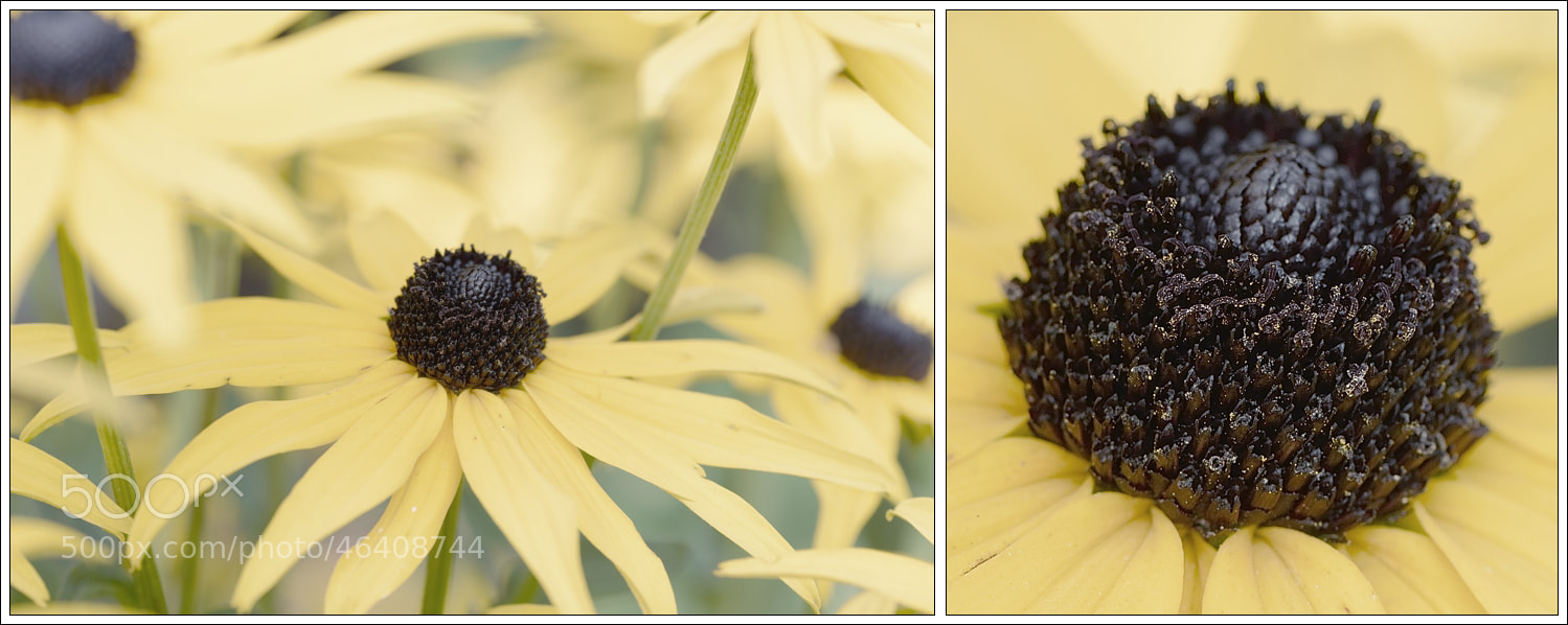 Photograph Yellow 2 III... by Almqvist Photo on 500px