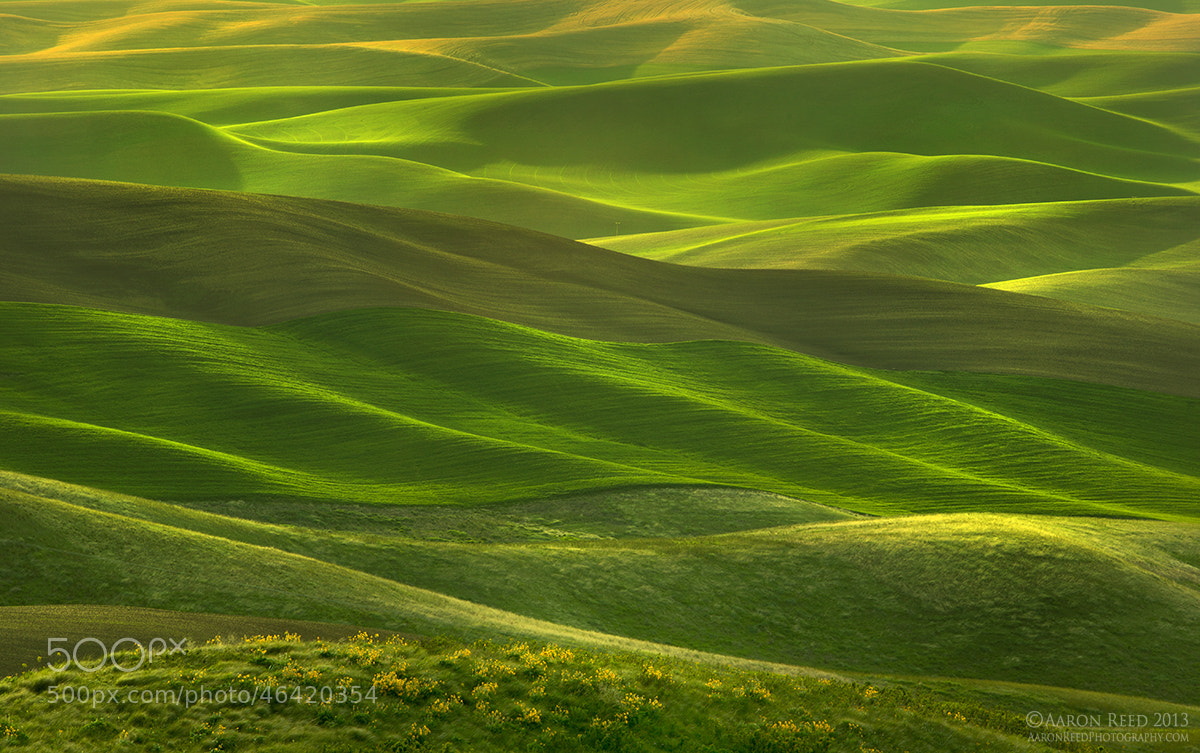 Photograph Roll Out The Green Carpet by Aaron Reed on 500px
