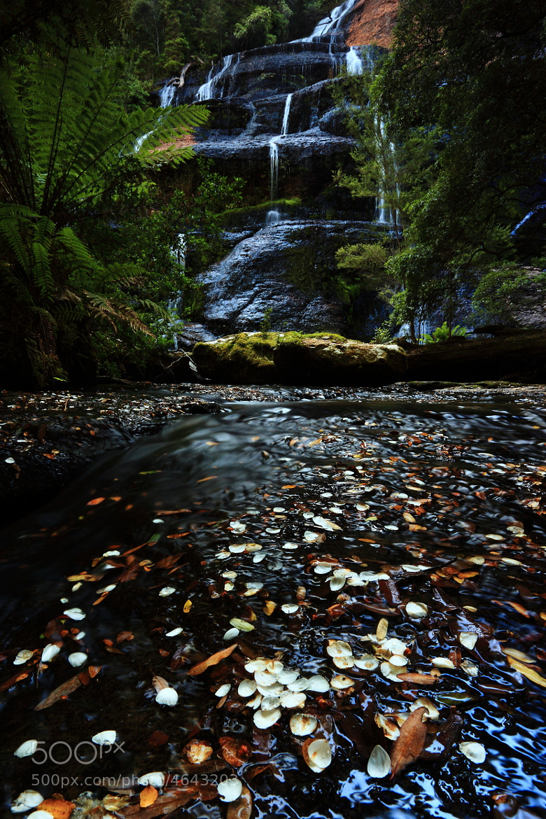 Photograph Leatherwood Confetti at McGowans Falls by Garth Smith on 500px