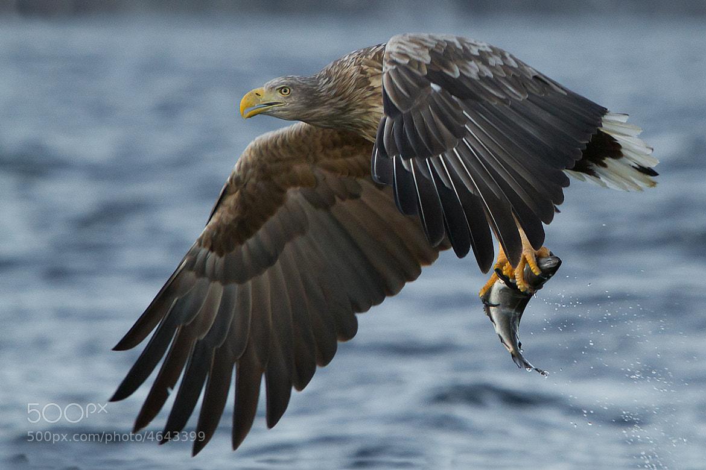 Photograph Catch by Fredrik Backman on 500px