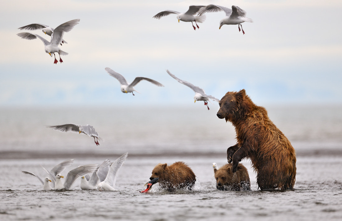 Photograph It's my catch ! by Nikolai Zinoviev on 500px