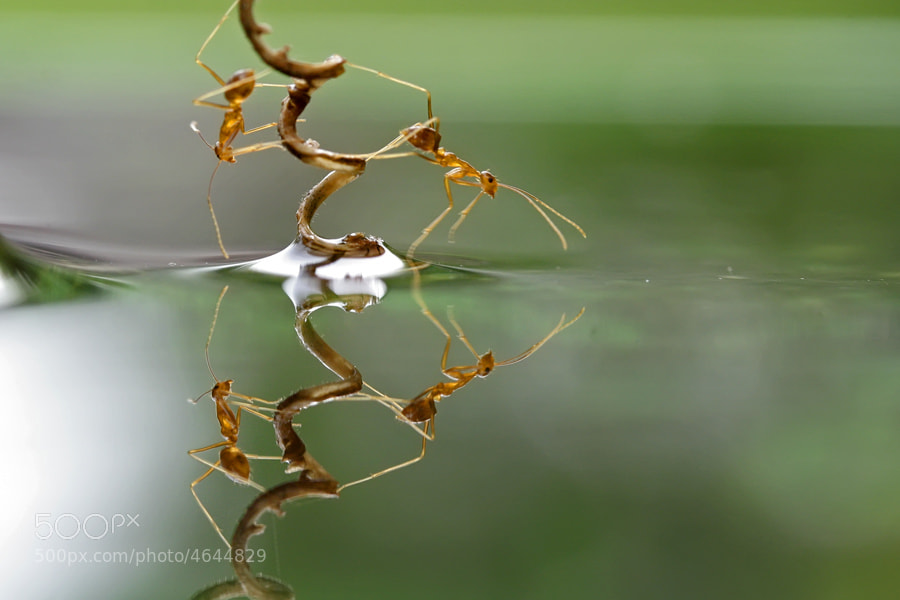Photograph Untitled by teguh santosa on 500px