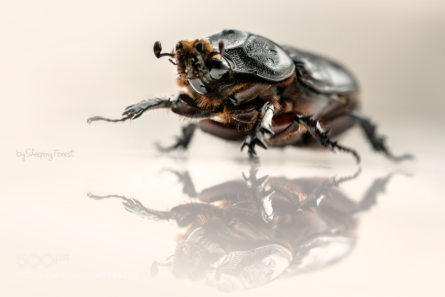 Photograph Beetle by Aronnsak Teelanuth on 500px